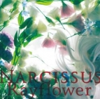 【アルバム】Rayflower/Narcissus