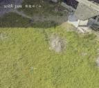 【アルバム】林原めぐみ/岡崎律子トリビュートアルバム with you 期間限定盤